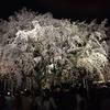 桜の季節はすぐ目の前
