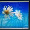 KVMからVMware Workstation Playerに移行したらWindowsのライセンス認証が通らず困った話(解決済み)
