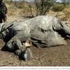 コロナの影響で絶滅危惧種の密猟が増加 その理由とは?