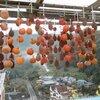 丹生都比売神社と初冬の山里風景