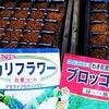 ブロッコリー・カリフラワーの種まき!