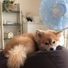 【扇風機は犬に意味がない?】〜人間とワンコの違い〜