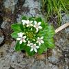 房総半島最南端 野島崎灯台 岩戸岩の間に咲いた花。 只今不動産屋さんのHP作成中。