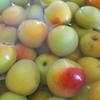 同じバラ科の梅と桃