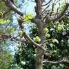4月の若葉と木の芽