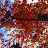 【京都・左京区】千百有余年ずっと紅葉の名所。紅葉と言えば、永観堂!絶対に見ておきたい紅葉の定番。