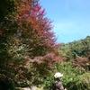 「マダム倶楽部」活動報告 11月12日 「四季の丘」を別ルートから登ってみる