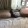 トラヨの寝床