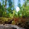 ビーサンでタイガの森を踏破すること。