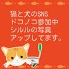 猫と犬専用SNSドコノコと、昔の携帯電話の話