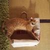 談話室におけるネコたちのガールズトーク