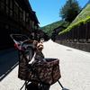 木曽奈良井宿☆わんことぶらり旅