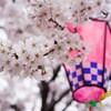 【春限定な飲み物特集】コンビニで買える、お花見のお供にはこのドリンク♪