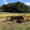 今日の農作業_20180908