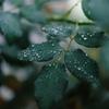 301. 雨の降る朝