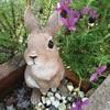 フレンチラベンダーの耳飾りが可愛いウサギちゃん