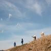 2年生の凧揚げ