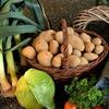 ビタミンが豊富なロマネスコ! 生で食べても大丈夫?