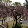 岡崎公園その2