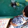美原公園のお祭り、金魚、買付証明