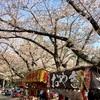 駆け抜けていった桜花