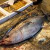 2021年3月8日 小浜漁港 お魚情報