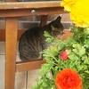 花が似合うキジ猫