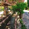 ☆八重桜祭り☆