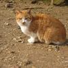 《琵琶湖一周の旅》4.猫守る彦根城