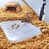 ニホンカナヘビに人工餌を置き餌。