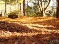 晩秋の円通院で見た紅葉と円通院の新緑