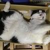 """『世界猫の日』だって‥ ~It's """"World Cat Day""""."""