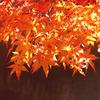京都ひとりでぶらり旅行 紅葉スポットベスト5
