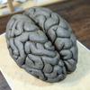 次の作品の模型として粘土で「脳」を作ったよ!【制作工程画像大量】
