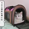 猫の道具 ~ダンボール王様席~