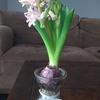 トレジョのお花