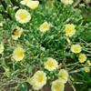 何の花か分かりますか? Part2
