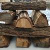 クヌギ vs 樫  薪の熱量比較①