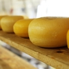 【チーズのプロになりたい】{アウトプット}チーズの文化史 No.1