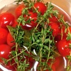 トマトのピクルスとセロリ・パプリカ・ヤングコーン・マッシュルームのピクルス