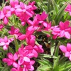 公園の春の花3