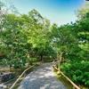 【写真】緑の小道