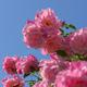 中之島バラ園の薔薇・薔薇・薔薇 その2 【枚数多いです】