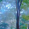 霧の森に射す光。
