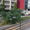 道ばたの木?
