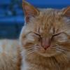 【猫の楽園】田代島を撮影:前編