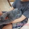 Dr.ネコー診療所 対話篇パート2 猫のおしっこ事情
