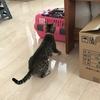 猫が腰抜かす