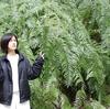 もさもさ葉っぱ:またもや手賀の丘公園いってきた。