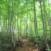新緑のブナ林を歩く。